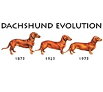 Evolution of the Dachshund