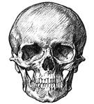HUMAN SKULL ANATOMY T-SHIRTS AND GIFTS