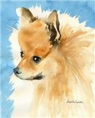 Pomeranian Stuff!