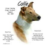 Collie (smooth sable)