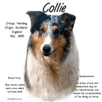 Collie (smooth merle)