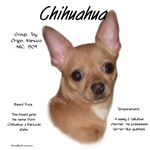 Chihuahua (smooth)