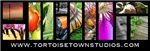 TortoiseTown Studios Logo