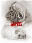 Pugs - Pets & Animals