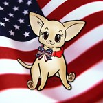 Patriotic Smooth Coat Chihuahua