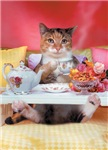 Breakfast in Bed - This adorable cat is celibrating mothers day or some other holiday occasion