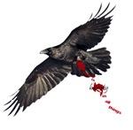Crow's Beauty