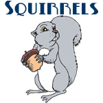 Cute Squirrel Designs