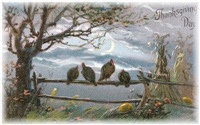 Turkeys in the Mist