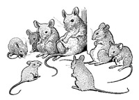 Council of Mice