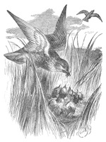 The Kind Mother Bird