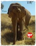 Gypsy the Asian Elephant-Adult Clothing