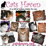 Cats Haven Feline Montages