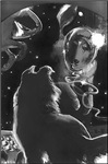 Collies In Space