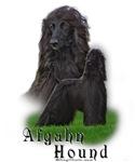 Afgahn Hound