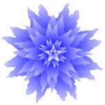 Venus Looking Glass Flower