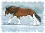Clydesdale in snow