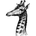 Hand Drawn Giraffe