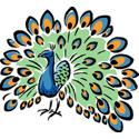 Peacock T-shirt, Peacock T-shirts