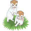 Baby Ferret T-shirt