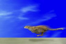 Speeding Cheetah by Marc Brinkerhoff