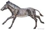 Grevy's Zebra by Marc Brinkerhoff