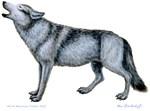 Howling Wolf by Marc Brinkerhoff