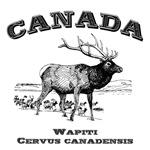 Canada - Wapiti
