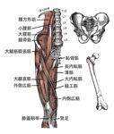Chinese anatomy