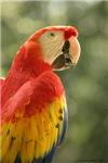 gr8birds