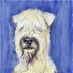 SOFT COATED WHEATEN TERRIER portrait
