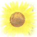 Yellow Sunflower Abstract