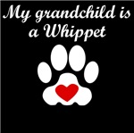Whippet Grandchild