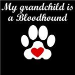 Bloodhound Grandchild