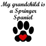 Springer Spaniel Grandchild