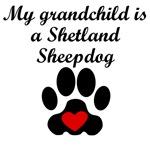 Shetland Sheepdog Grandchild