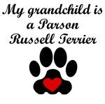 Parson Russell Terrier Grandchild