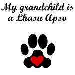 Lhasa Apso Grandchild