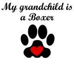 Boxer Grandchild