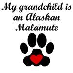 Alaskan Malamute Grandchild