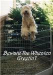 Beware the Wheaten Greetin'