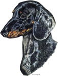 Delightful Dachshund, Doxie Dog Products & Gifts