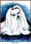 Maltese Dog Painting Designs