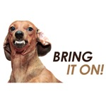 Bring It On - Dachshund