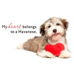 Havanese Heart