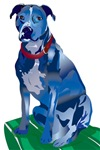 BLUE PITBULL nbg