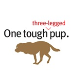 One Tough 3-legged Pup.