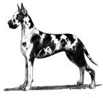 Great Dane items with Harlequin design