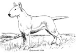 White Bull Terrier items with this design