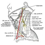 Neck Diagram
